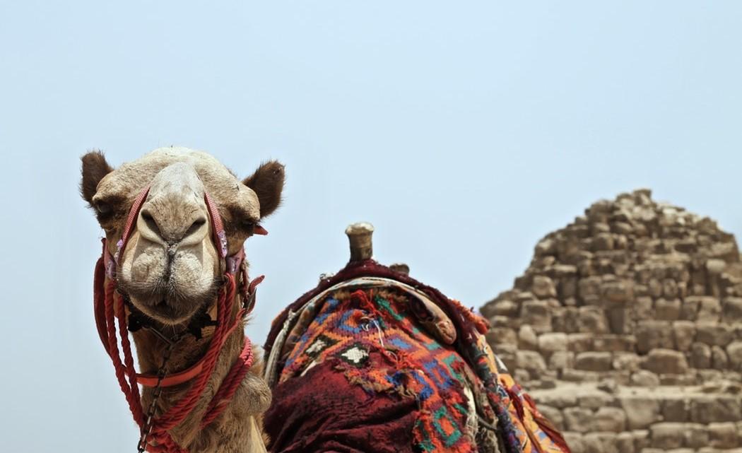 Bitcoin Egypt