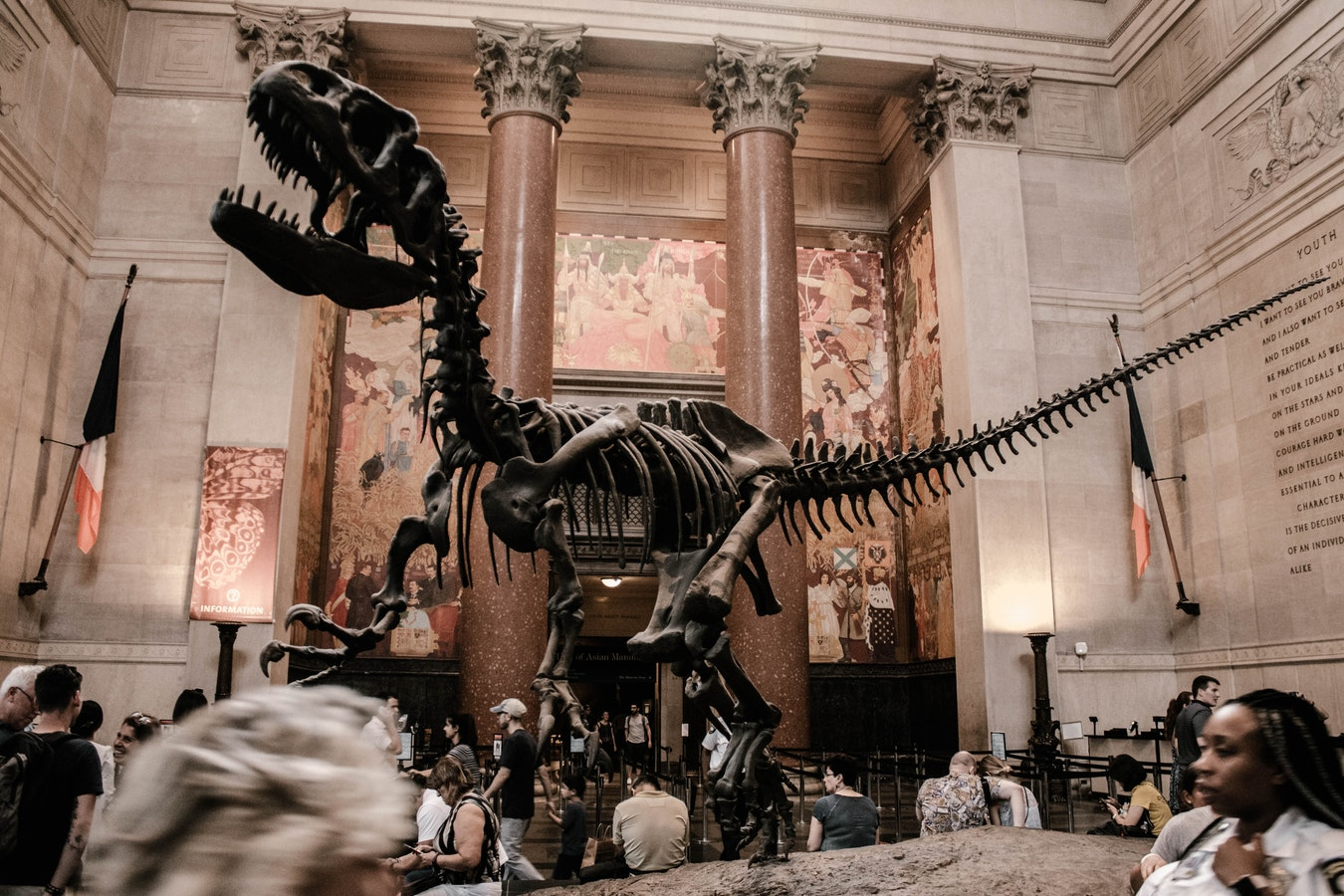 Dinosaurier im American Museum of Natural History, New York, United States Foto CC0 Public Domain by Unsplash